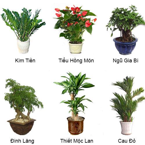 """Một số cây cảnh được trồng trong nhà giúp """"gia tăng"""" vượng khí"""
