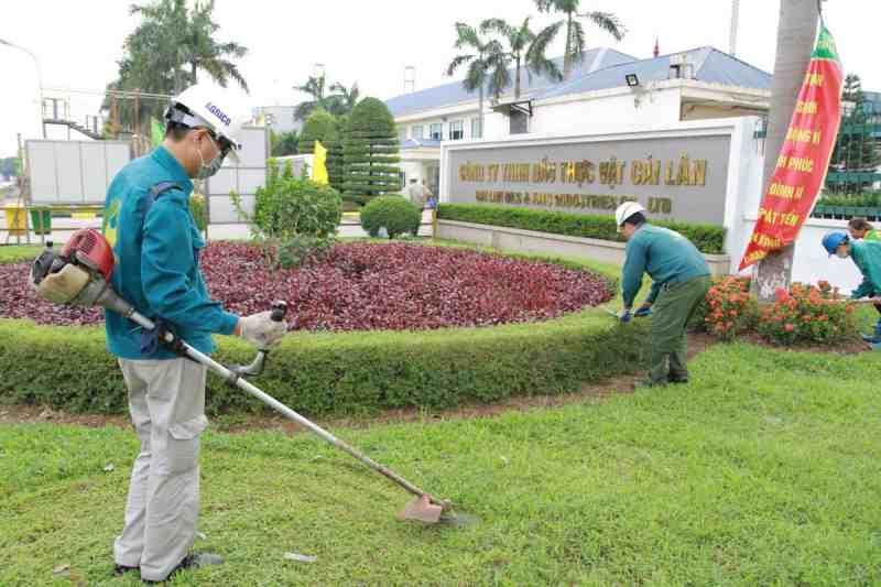 Cần có cách cắt tỉa tạo dáng cây cảnh định kỳ tại bệnh viện để cây được phát triển tốt theo đúng khả năng