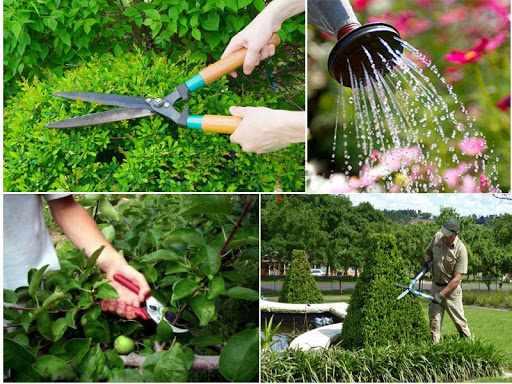 Một vài kỹ thuật chăm sóc cây cảnh dành cho người trồng