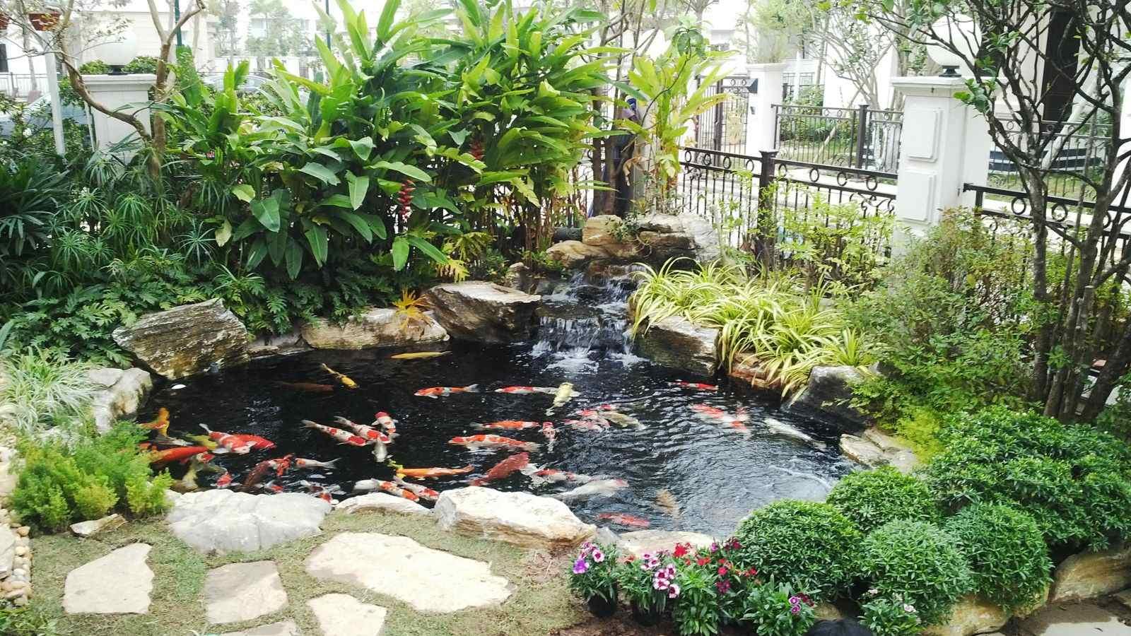 Hồ cá sân vườn nhỏ tạo nên nét đẹp riêng của ngôi nhà