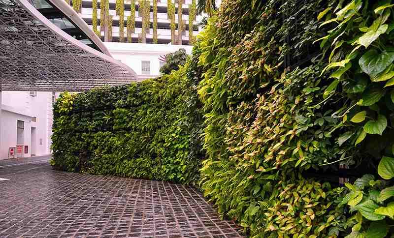 Vườn Thắng Dung luôn mang đến dịch vụ tốt, sản phẩm đẹp và sự hài lòng của khách hàng