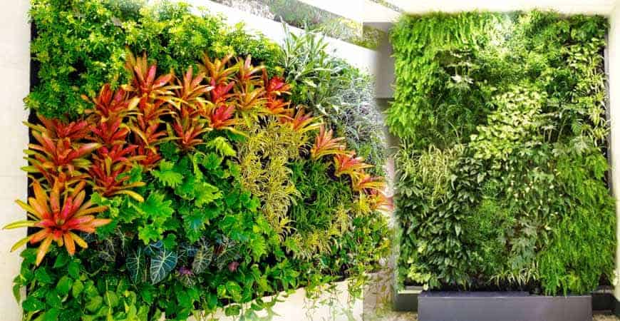 Vườn tường đứng tạo nên một màu xanh mát mẻ cho không gian nhà ở