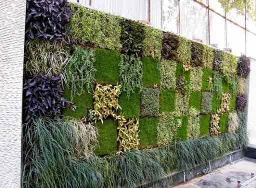 Tường cây trong nhà màu xanh sẽ góp phần làm sạch mọi thứ xung quanh