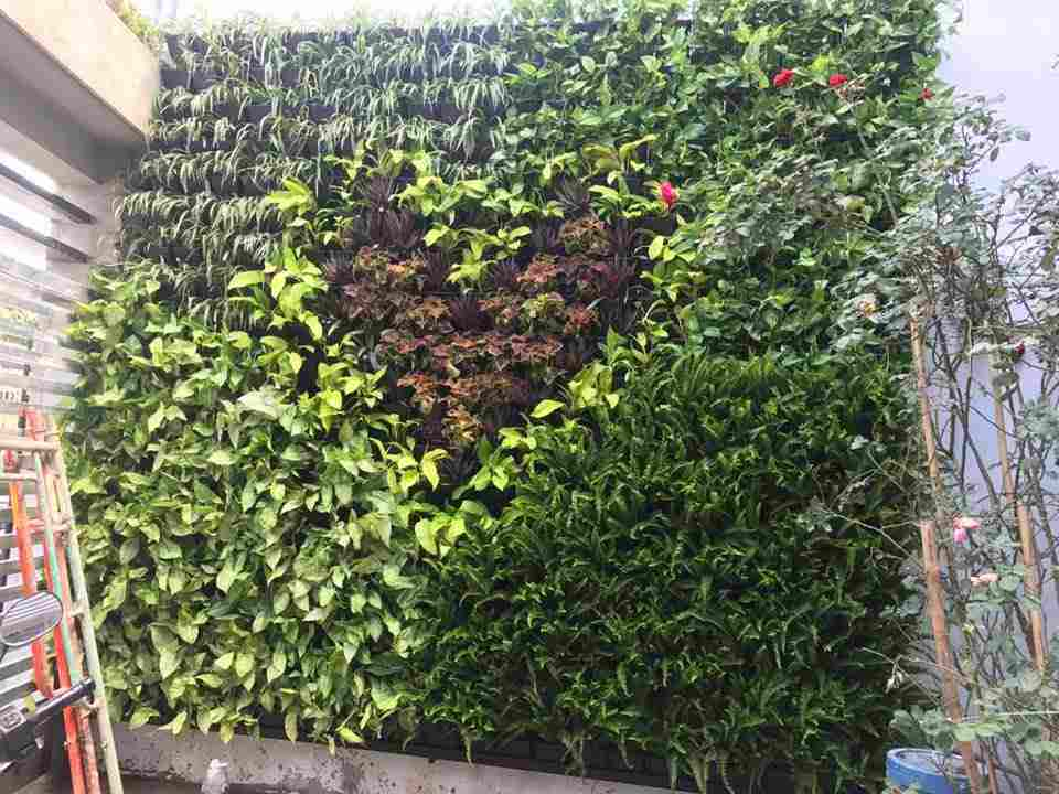 Một số cây xanh được dùng để thiết kế vườn trên tường