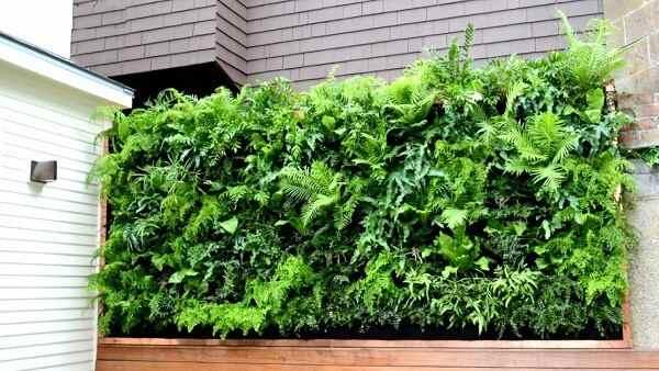 Một số cây xanh dùng để trang trí vườn đứng ban công